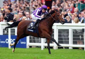 Excelebration-Queen-Elizabeth-II-stakes